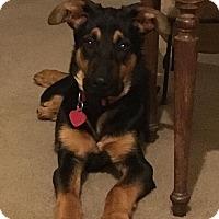 Adopt A Pet :: Rory - Portland, ME