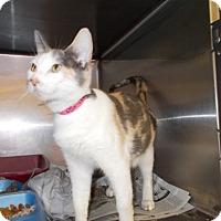 Adopt A Pet :: Crystal - Copperas Cove, TX