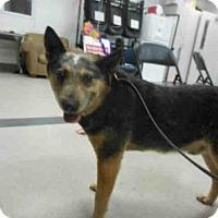 Adopt A Pet :: ID#A332572 - Petaluma, CA