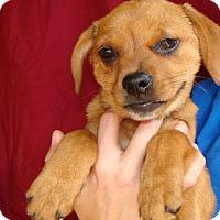 Adopt A Pet :: Elias - Oviedo, FL
