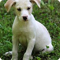 Adopt A Pet :: Merritt - Waldorf, MD