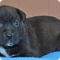 Adopt A Pet :: **PIERRE** MEET AUG 6TH! - Mukwonago, WI