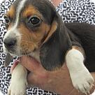 Adopt A Pet :: Gloria