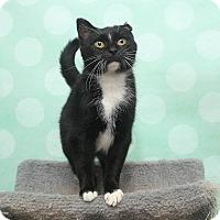 Adopt A Pet :: Leinies - Chippewa Falls, WI