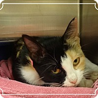 Adopt A Pet :: MARILYN - Marietta, GA