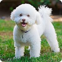 Adopt A Pet :: Teddy - Placentia, CA