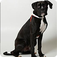 Adopt A Pet :: Buster - Columbus, OH
