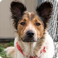 Adopt A Pet :: Meredith Vieira - Jersey City, NJ