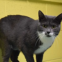 Adopt A Pet :: Tootsie - Pottsville, PA