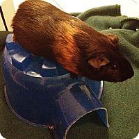 Adopt A Pet :: Leap - Fullerton, CA