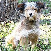 Adopt A Pet :: Britnee - Mocksville, NC