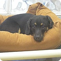 Adopt A Pet :: Warren - Wickenburg, AZ