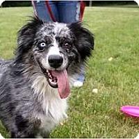 Adopt A Pet :: Sae Dee - Blooming Prairie, MN
