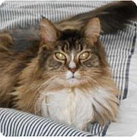 Adopt A Pet :: Radar - Jeffersonville, IN