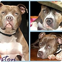 Adopt A Pet :: Preston - Sylvania, OH