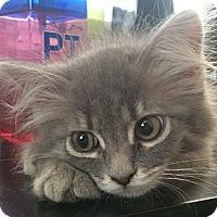 Adopt A Pet :: Daphne - Winchester, CA