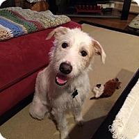 Adopt A Pet :: Miller - Rockaway, NJ