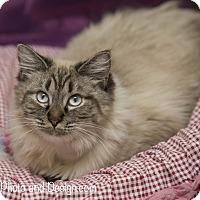 Adopt A Pet :: Anna - Fountain Hills, AZ