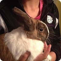 Adopt A Pet :: Phineas - Conshohocken, PA