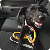 Adopt A Pet :: Maggie - Chicago, IL