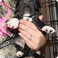 Adopt A Pet :: empire - mooresville, IN