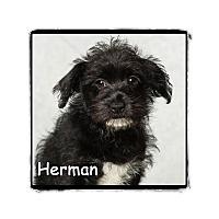 Adopt A Pet :: Herman - Warren, PA