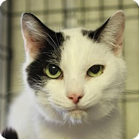 Adopt A Pet :: Preston - Winston-Salem, NC