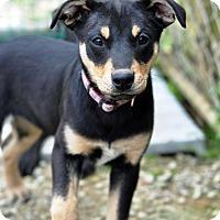 Adopt A Pet :: Lenz - Pleasant Plain, OH