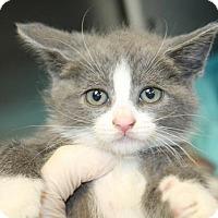 Adopt A Pet :: Louisa (foster care) - Philadelphia, PA