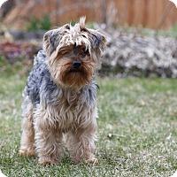 Adopt A Pet :: JAX - Ile-Perrot, QC