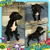 Adopt A Pet :: Jordan in CT - Manchester, CT