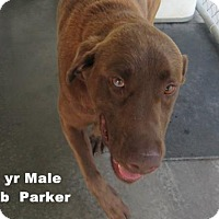 Adopt A Pet :: Parker - Washington, DC