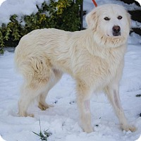 Adopt A Pet :: Blanche - Enfield, CT