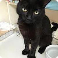 Adopt A Pet :: Bertram - Salisbury, MA