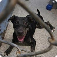 Adopt A Pet :: Hershey (Cocoa Center) - Cocoa, FL