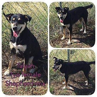 Shepherd (Unknown Type) Mix Dog for adoption in DeForest, Wisconsin - Talyah
