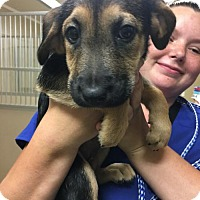 Adopt A Pet :: Ellie Mae White in MS - Providence, RI