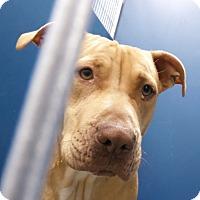 Adopt A Pet :: Deena - Henderson, NC