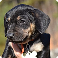 Adopt A Pet :: Mesolithic - Stone Age Litter - Acworth, GA