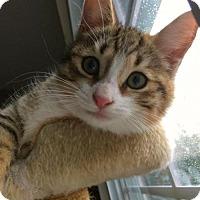 Adopt A Pet :: Autumn - East Brunswick, NJ
