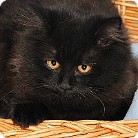 Adopt A Pet :: Beatrice - Gatineau, QC