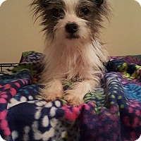 Adopt A Pet :: Larry - New Oxford, PA