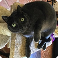Adopt A Pet :: Fiona - Sherman Oaks, CA