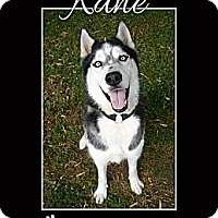 Adopt A Pet :: Kane - Clearwater, FL