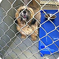 Adopt A Pet :: Koda - Fort Riley, KS