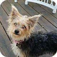 Adopt A Pet :: Sibbie - Austin, TX