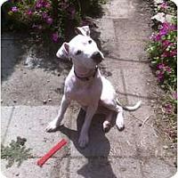 Adopt A Pet :: Lila Butternut - Cleveland, OH