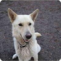 Adopt A Pet :: Jake - Green Cove Springs, FL