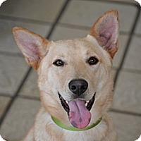 Adopt A Pet :: Sunny..I am a 35 lb cutie! - Redondo Beach, CA