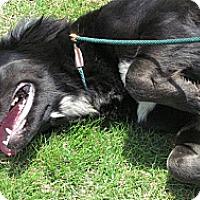 Adopt A Pet :: Andrea - Huntsville, AL